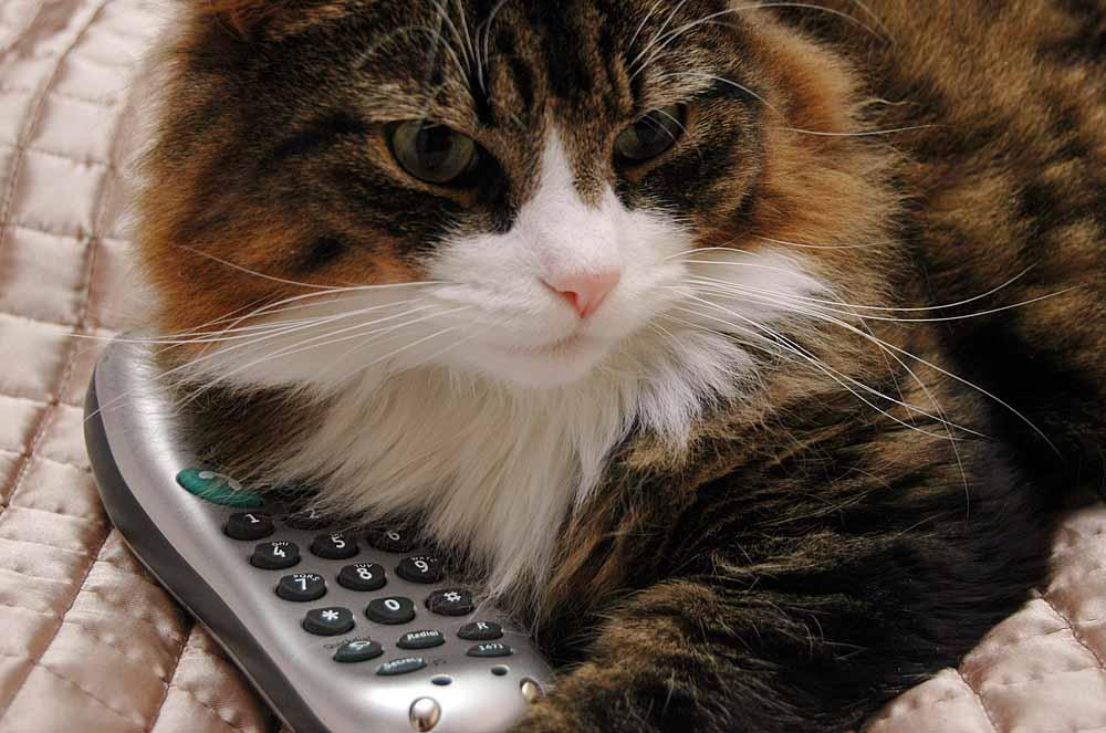 Un chat au téléphone